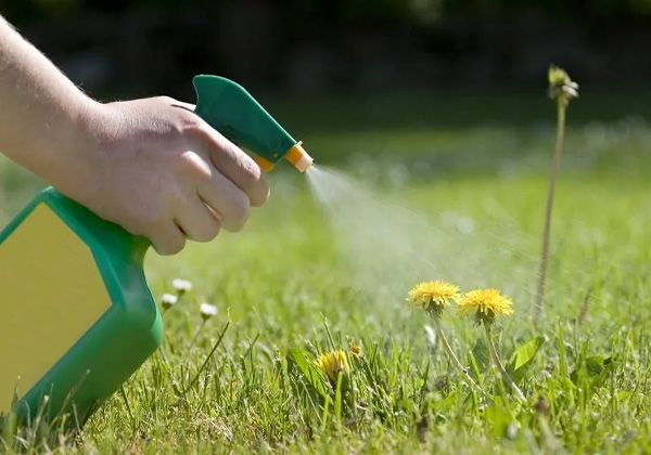 Killing weeds on natural grass