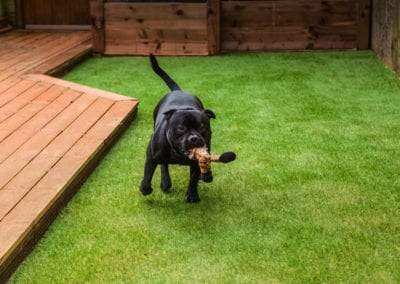 Pet Area Synthetic Grass